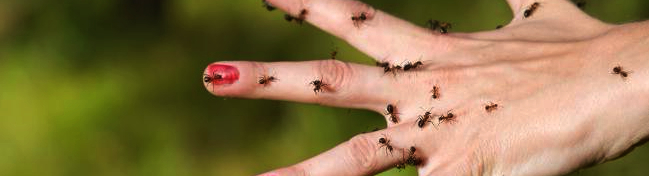 Fumigaciones df el fumigador bayer como matar chinches - Como acabar con las hormigas en el jardin ...